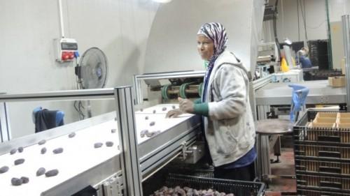 Sono tra 6 e 12mila i palestinesi che lavorano per aziende agricole israeliane nella sola Valle del Giordano