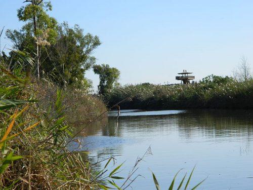 Il fiume Alexander nel trattao israeliano